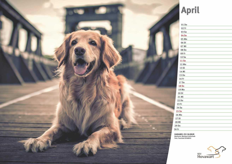 Hovawart Kalender 2021 5