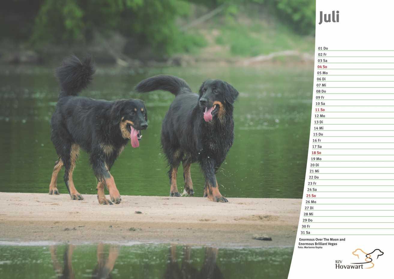 Hovawart Kalender 2021 8