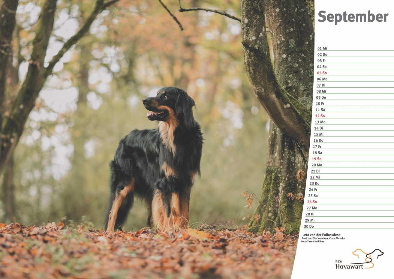 Hovawart Kalender 2021 10